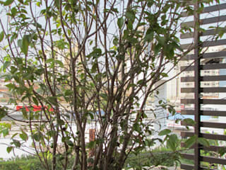 Jabuticabeira: Terraços  por Marianna Vetorazzo Haddad Arq+Interiores