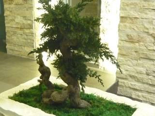 piante stabilizzate  stabilized plants  moss stabilized lichene stabilizzato:  in stile  di  landscapeABC studio garden design