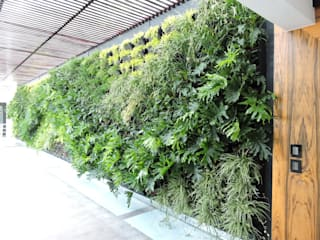 Regenera Mx - Fábrica Ecológica Balconies, verandas & terraces Plants & flowers