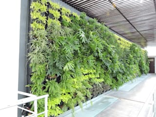 Muro Verde Terranova Tabasco de Regenera Mx - Fábrica Ecológica Moderno