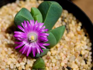 Individual Plants de Marga Rústico