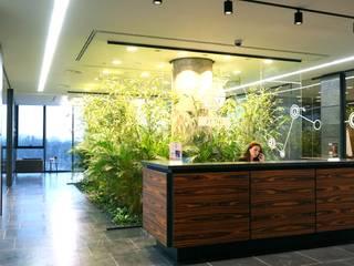 Офисное озеленение:  в . Автор – Укр Ландшафт Парк