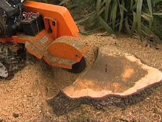 Stump Removal:   by Johannesburg Tree Felling