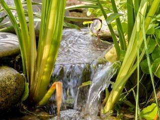 Albercas naturales de estilo  por jardinista