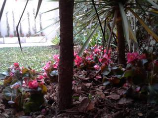 Jardín Los Papiros: Jardines de estilo  por Dhena CONSTRUCCION DE JARDINES,Moderno