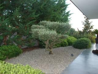 Jardim Privado Jardins modernos por Verde Esquisso Lda. Moderno