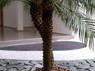 EDIFICIO MIRADOR DE SAN PEDRO - SANTA MARTA/MAGDALENA - COLOMBIA BRASSICA SOLUCIONES PAISAJISTICAS S.A.S. Jardines de estilo tropical