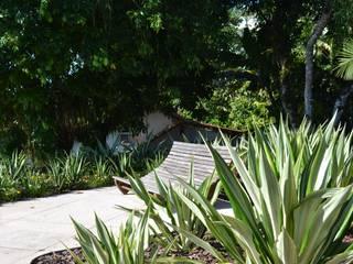 Jardins tropicais por TM&LH_ arq.arte - Tatiana Moraes e Lucia Helena Tropical