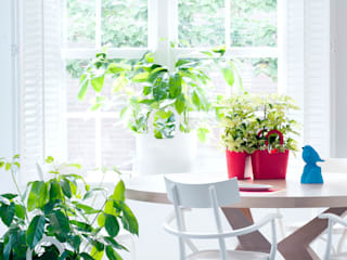 Pflanzenfreude.de 室內景觀 Multicolored