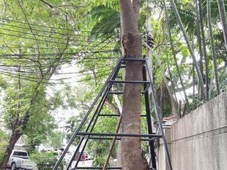 ฐานรากค้ำยันต้นไม้ คุณประจวบ โดย บริษัทเข็มเหล็ก จำกัด