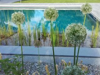 Garten mit Naturpool Moderner Garten von Galabau Michael Richter Modern