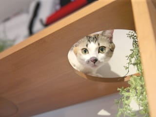 NYAND SHELF <CAVE> - Furniture for Cats and Humans - &lodge inc. / 株式会社アンドロッジ Stanza dei bambiniContenitori