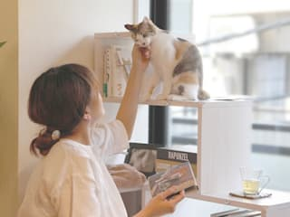 NYAND SHELF <ROOT> - Furniture for Cats and Humans - &lodge inc. / 株式会社アンドロッジ Stanza dei bambiniContenitori