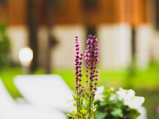 Беседка для Татьяны Лютаевой: Сады в . Автор – Anastasia Yakovleva design studio,