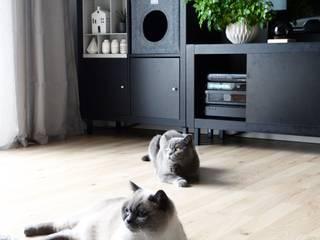die moderne katze m bel accessoires in freiburg homify. Black Bedroom Furniture Sets. Home Design Ideas