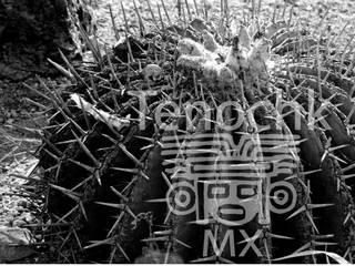 Terrario Ancestral de terranova Proyectos de Jardinería y Limpieza Rústico