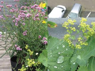 Urban Garden Designer Balconies, verandas & terraces Plants & flowers