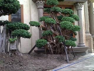 modern  by TUKANG TAMAN SURABAYA - jasataman.co.id, Modern