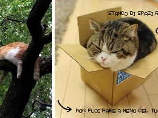 Cat House_Tree:  in stile  di Francesca Di Giannantonio_Architetto, Minimalista