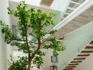 Modern Corridor, Hallway and Staircase by Công ty trách nhiệm hữu hạn ANP Modern