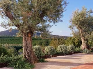 JARDIMGARVE Mediterranean style garden