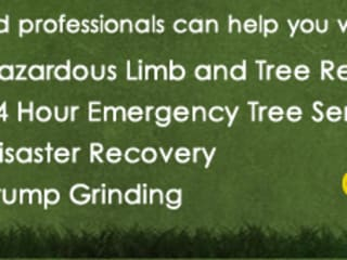 Tree Felling Johannesburg:   by Tree Felling Johannesburg