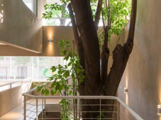 ห้องโถงทางเดินและบันไดสมัยใหม่ โดย Paula Mariasch - Juana Grichener - Iris Grosserohde Arquitectura โมเดิร์น