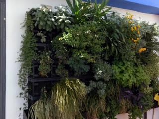 Detalle al mes de plantación. Jardin Vertical con Substrato.: Jardines delanteros de estilo  de GreenerLand. Arquitectura Paisajista y Tematización