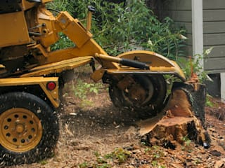 Reliable Tree Felling Services by Cape Town Tree Felling