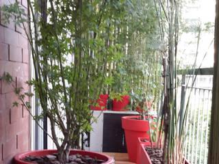 Balcon Villa Crespo-Bs As- Argentina: Terrazas de estilo  por Ib - Paisajista