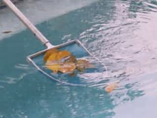 Pool Cleaning Project by Garden Services Johannesburg