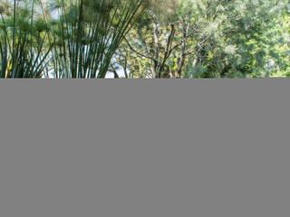 Jardín Mariana: Jardines de estilo  por Mexikan Curious