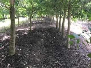 ผลงานของบริษัท:   by Kz_รับจัดสวน จำหน่ายต้นไม้ใหญ่ ต้นไม้เล็ก ทุกชนิด - สวนลุงลุย
