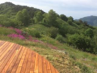 Akdeniz Bahçe Studio S.O.A.P. Akdeniz
