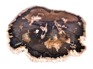 Mobiliario exclusivo de madera petrificada:  de estilo  por Art in Pietra