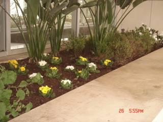 Moradias Particulares Jardins clássicos por Viveiros da Boa Nova, Lda Clássico