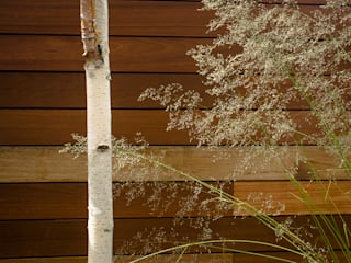 Himalayan Birch on Yellow Balau: modern Garden by Robert Hughes Garden Design