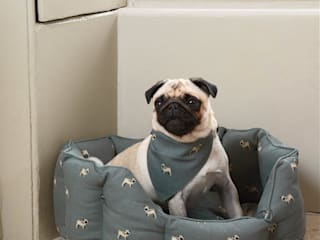 Sophie Allport Pug Collection: modern  by Sophie Allport, Modern