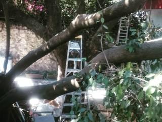 Mantenimiento de jardines : Casitas de jardín de estilo  por Línea de tierra
