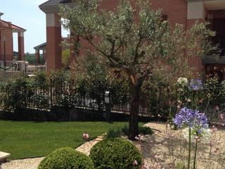 Un giardino mediterraneo : Giardino anteriore in stile  di AbitoVerde