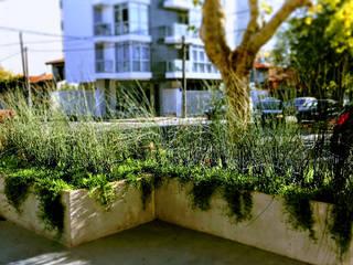 Canteros de Acceso: Jardines de estilo  por Vivero Antoniucci S.A.