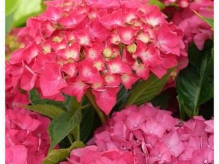 Mooi kleuren in de tuin.:   door onlinegroen