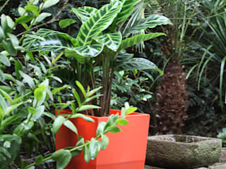 Viridis Productos Eco Amigables:  tarz Bahçe