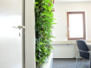根據 BAUMHAUS GmbH Raumbegrünung Pflanzenpflege 現代風