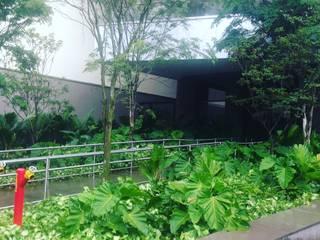 Jardim Tropical Espaços comerciais tropicais por Edu Leal Paisagismo Tropical
