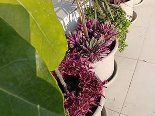 Balcones y terrazas tropicales de Quetzal Jardines Tropical