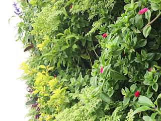 Minimalist style garden by Quetzal Jardines Minimalist