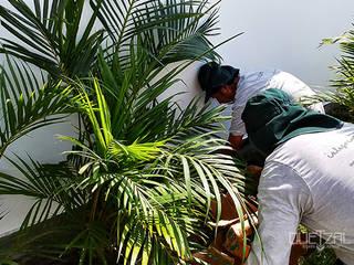 Jardines tropicales de Quetzal Jardines Tropical