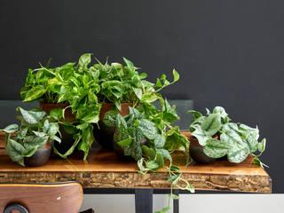 Pflanzenfreude.de KitchenAccessories & textiles