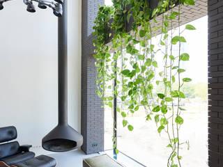 Pflanzenfreude.de 客廳配件與裝飾品